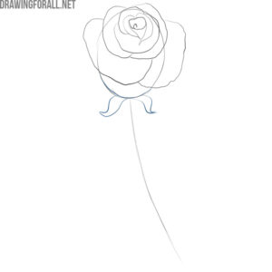 how to draw a simple rose flower