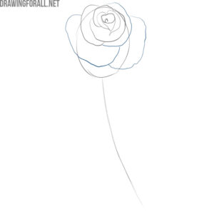 how to draw a simple rose step by step
