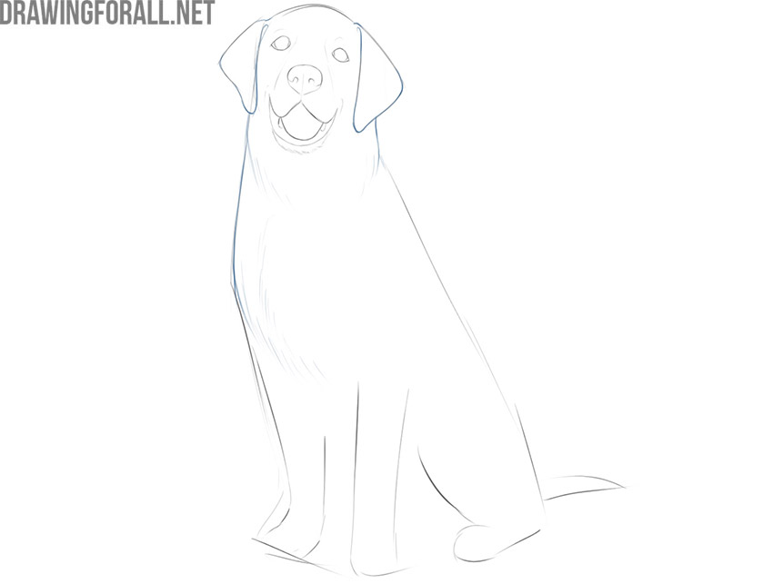 how to draw a sitting dog step by step