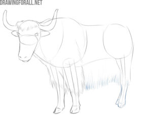 how to draw a yak easy