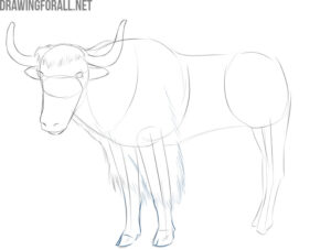 how to draw a yak easy step by step