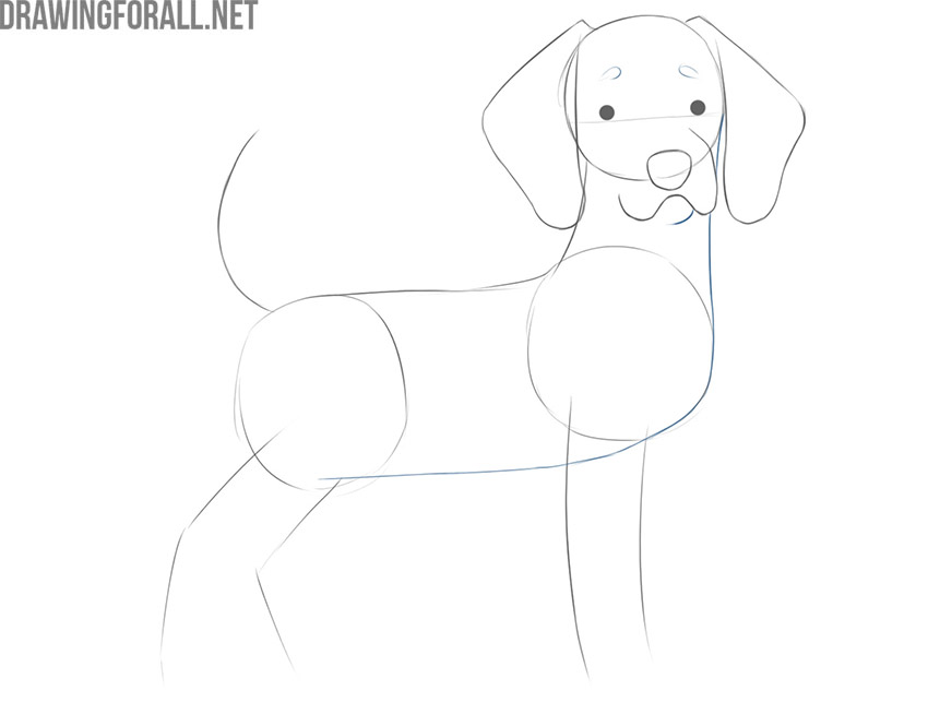 how to draw your dog as a cartoon