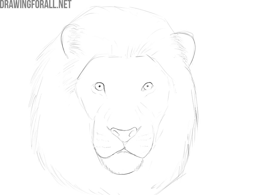How to draw the face of a lion